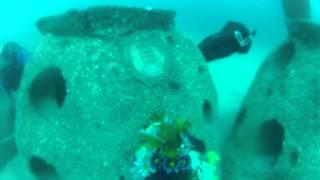 eternal reefs miami ft lauderdale golden beach reef site 6 26 30 2014