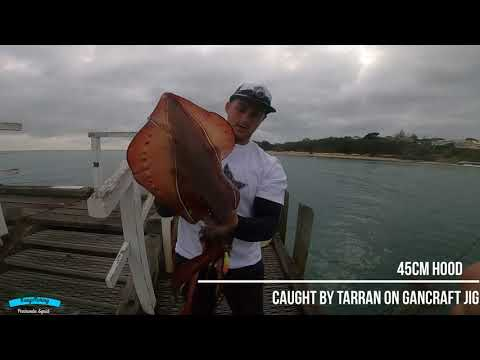 Mornington Peninsula Fishing | Victoria | Squid | Landbased