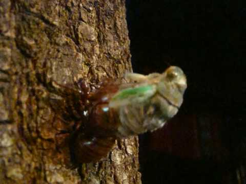 Mail, Comments & Social - Cicada Mania
