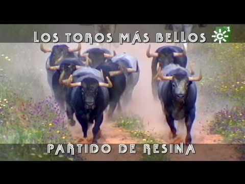PGM 490 PARTIDO de toros bravos DE RESINA PARA MADRID