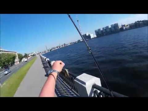 рыбалка на неве судак