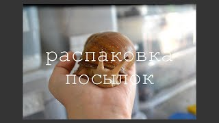 Download ЛЕТНЯЯ РАСПАКОВКА ПОСЫЛОК Mp3 and Videos