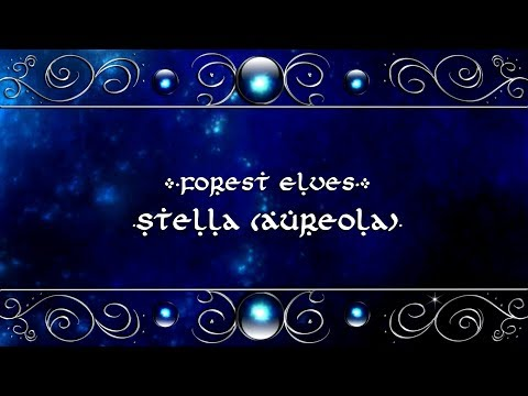 Forest Elves - Stella (Aureola)【Original Song】