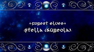 Forest Elves - Stella (Aureola)【Original Song】