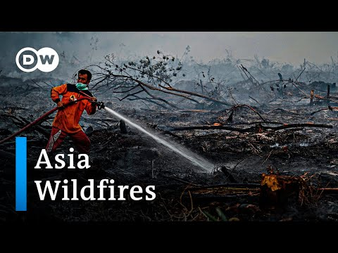Forest wildfires in