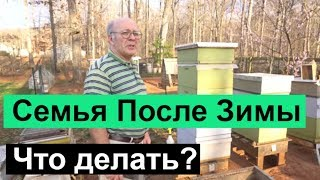 Пасека # 68 Что Делать? Семья После Зимы. Пчеловодство для начинающих  Пасека