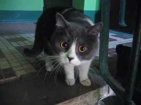 Кот сова с огромными глазами - YouTube