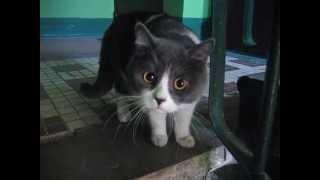 Кот сова с огромными глазами