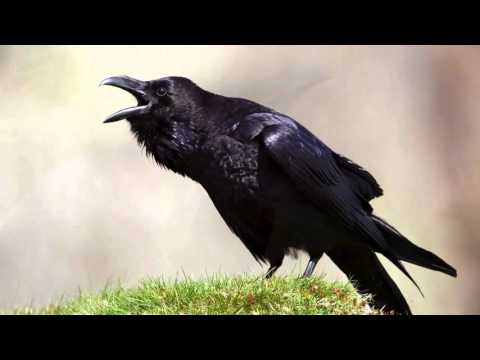 The Raven Himself is Hoarse Analysis - Macbeth Act 1, Scene 5