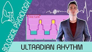 The Stages of Sleep: Ultradian rhythm - Biological Psychology [AQA ALevel]