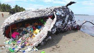Pojawienie się tego wieloryba zszokowało cały świat