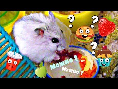 Чем кормить джунгарского хомяка 🐹 🥕🥦 Что МОЖНО давать и НЕЛЬЗЯ ?