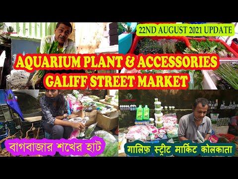 PLANTED AQUARIUM PLANT & ACCESSORIES PRICE AT GALIFF STREET PET MARKET KOLKATA   22ND AUG 2021 VISIT