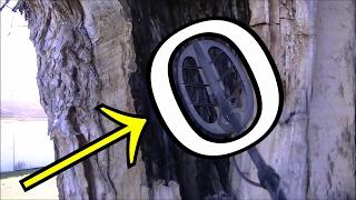 Metal Detecting INSIDE TREE, Found MONSTER!
