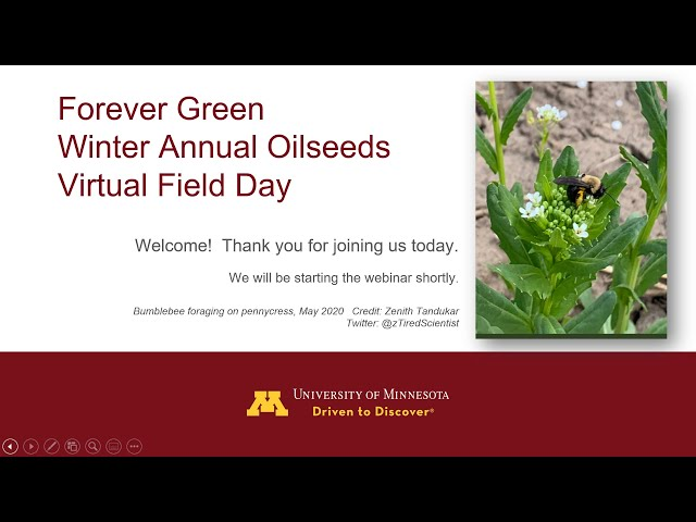Forever Green Winter Annual Oilseeds Virtual Field Days -- Session 1 YouTube
