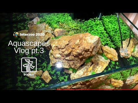 Tropica Limited Edition Aquascape 14 Week Update Youtube