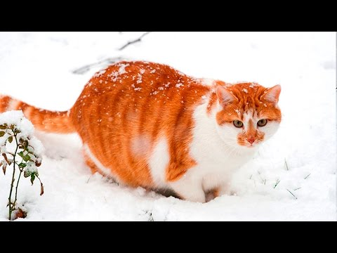 Cats Playing in Snow #8
