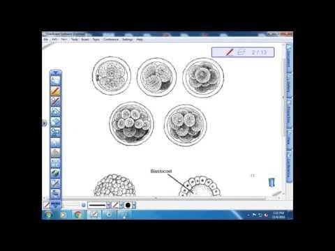 BI 112: Early Development and Genetics Intro