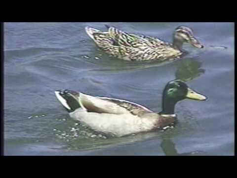 Skimmerboat.com Informational Video