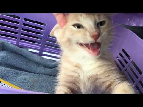 Miracle Kitten Puma is Back!
