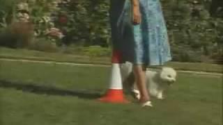 On-leash Heeling - Training The Companion Dog 3  Walking & Heeling