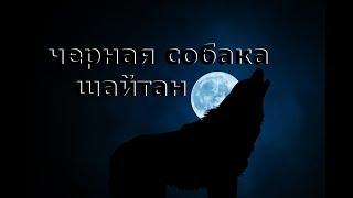 Черная собака шайтан