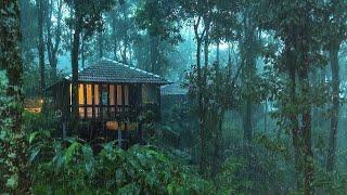 Pioggia Rilassante nella Foresta Nebbiosa per Dormire in 5 Minuti - Suoni di Pioggia e Temporale screenshot 2