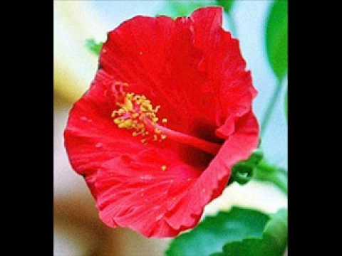 Al-Jawaher - Yang Merah Itu saga.wmv