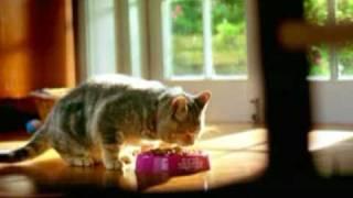 The best pets food! (Лучший корм для кошек!)