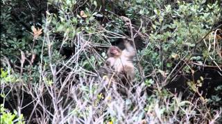 平気で食事する猿を撮影しました。カメラは見慣れてないようで隠れてし...
