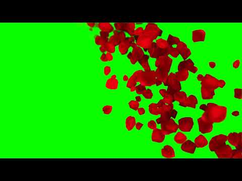 Romantic flying red rose flower petals Green Screen Video,Animated background video effects thumbnail