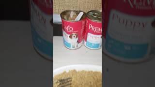 Ши-тцу:  как кормить 1,5 мес.щенков