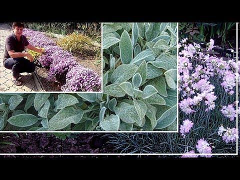 Самые неприхотливые многолетние растения для дачи и сада  ЧАСТЬ2   цветы