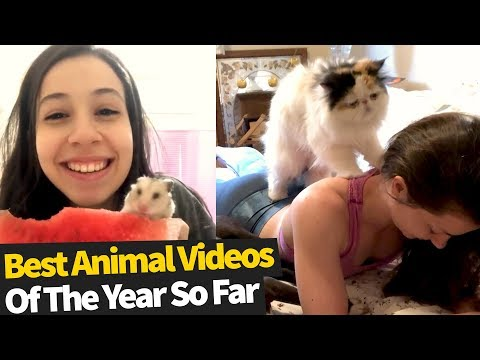 50 Best Animal Videos Of The Year, So Far (2019)