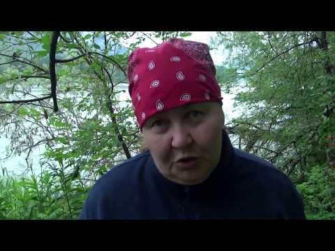 Трава зверобоя – свойства, применение, противопоказания