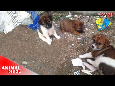 Three Stray Puppies Have Been Rescued and Adopted