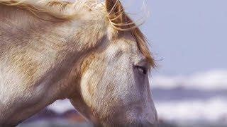 PILGRIM by ENYA - Beautiful HORSES