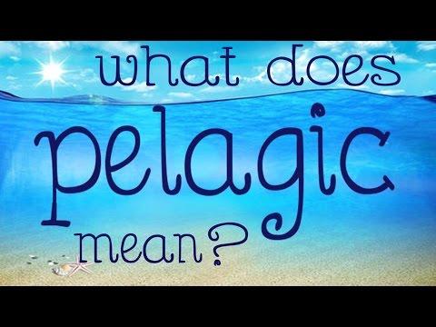 What Does Pelagic Mean?