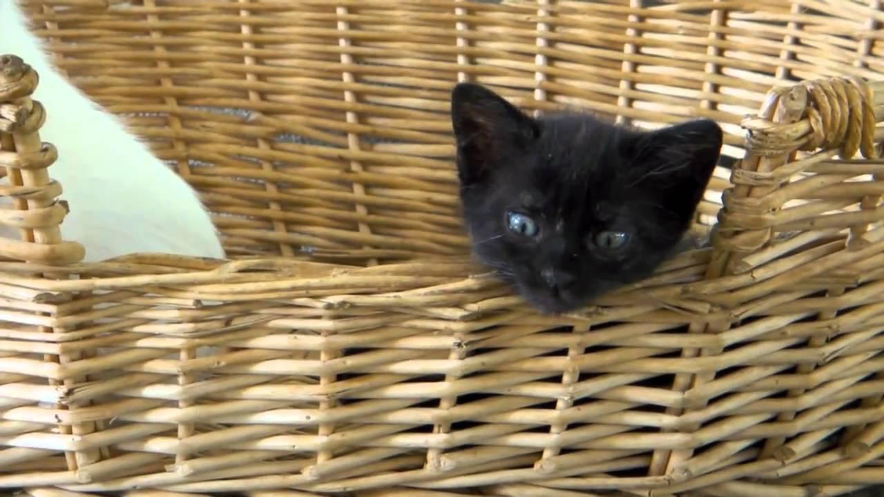 Animal Shelter Bonaire, episode 1: Happy Island Pets