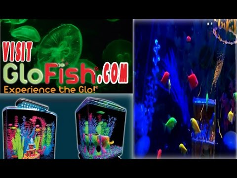 HOW TO CARE Glow Fish History / And Rumors Cleared