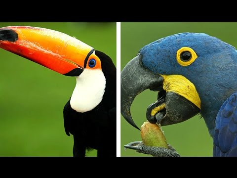 Top 10 Most Expensive Birds in the World