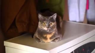 Кот на стиральной машине