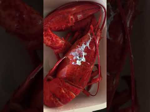 Cooked Lobster