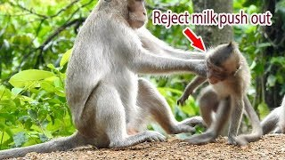 Pity cute baby monkey very hungry but mom reject milk | Baby disappointed and cry seizures angry mom