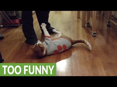 Amadeus the cat does his favorite trick!