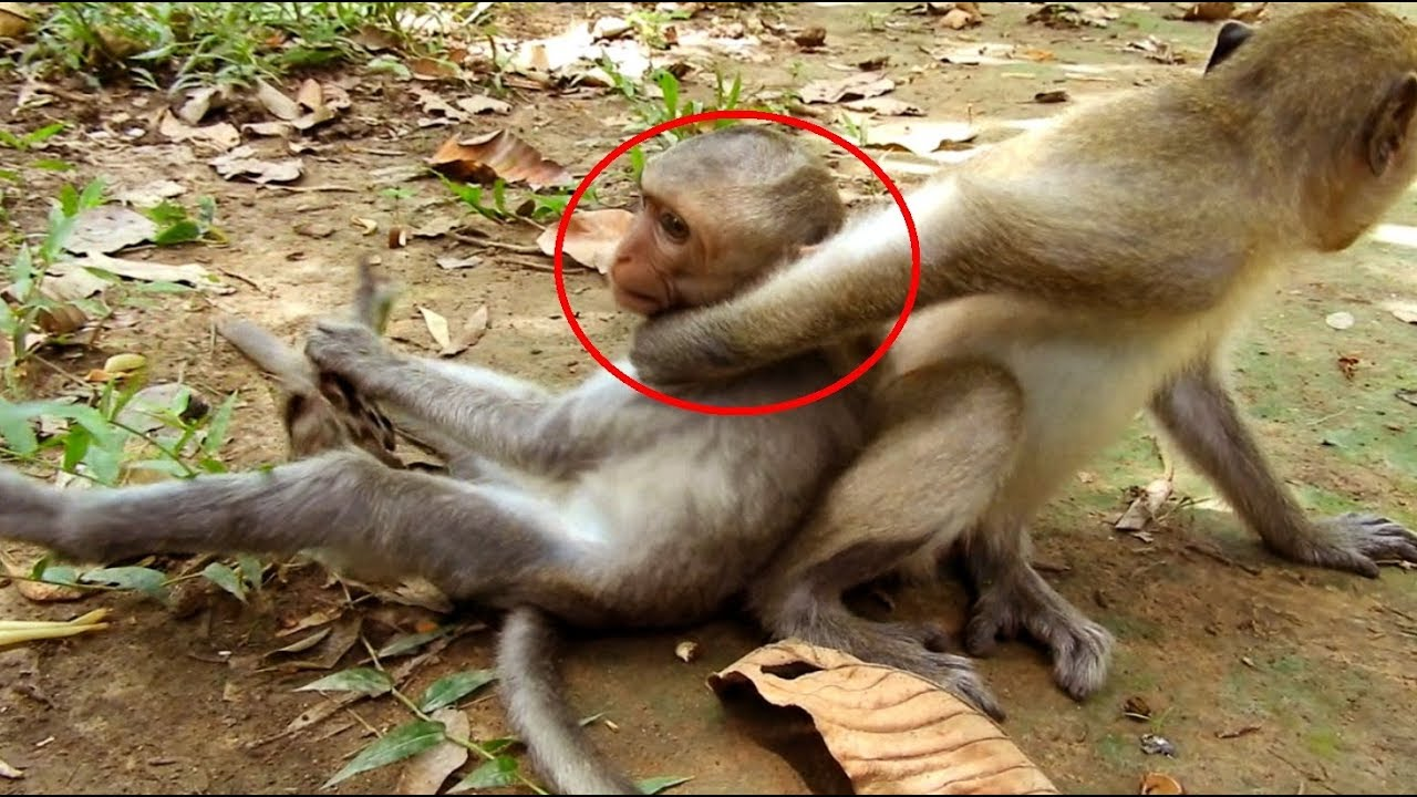 Brother Sister Monkeys Are Angry To Each Other Till Fighting Oh My