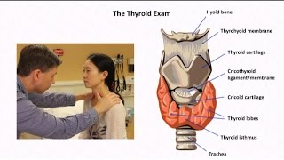 The Thyroid Exam and Physical Diagnosis of Thyroid Disease