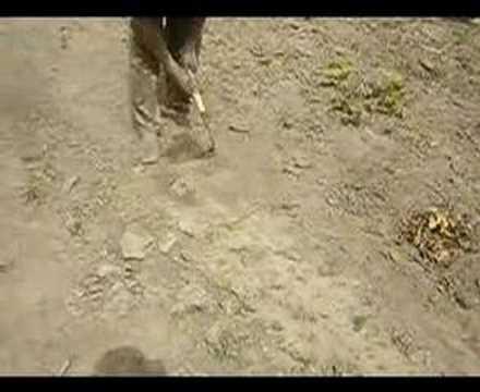 farming in africa 3