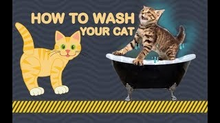 Bengal Cats React To : How To Wash Your Cat 101 (2019) - Ep.22