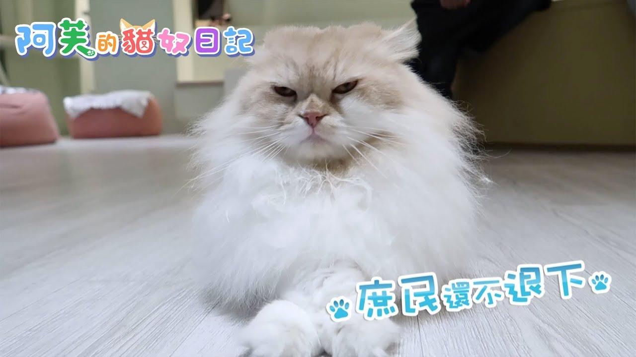 阿芙的貓奴日記 第5集 - 阿芙進入貓奴天堂 與貓共渡美好時光